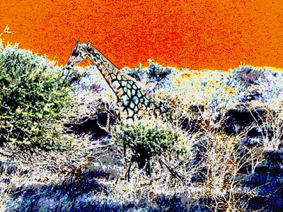 psychedelic-giraffe 1 245