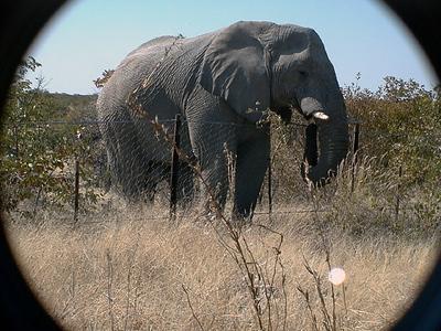 elephant-etosha 1 195