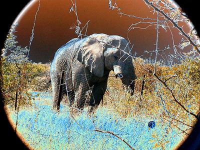 solarized-elephant-etosha 1 194