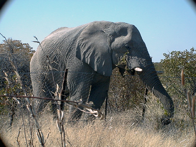 elephant-etosha 1 198