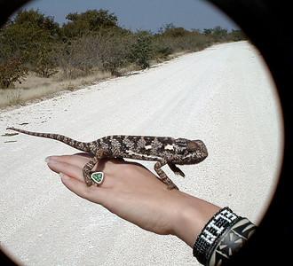 chameleon 1 289