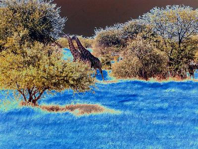 solarized-giraffes 1 268