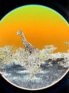 solarized-giraffe 1 273