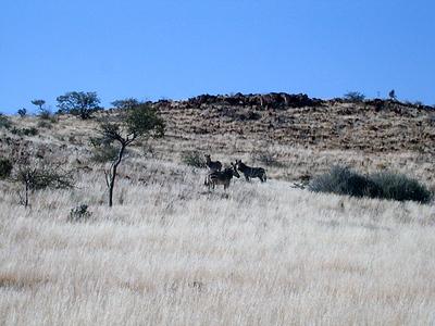 mtn zebras 1 348