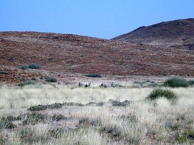 black-rhinos 1 382