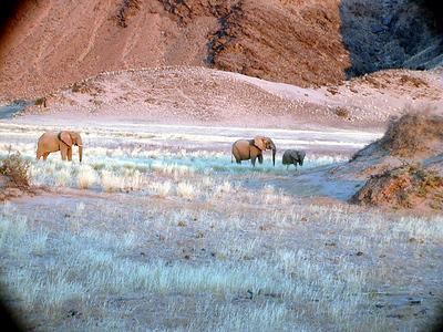 desert-elephants 1 555
