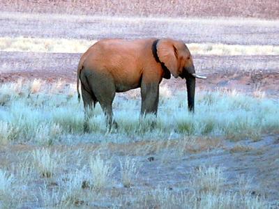 elephant-hoanib 1 564