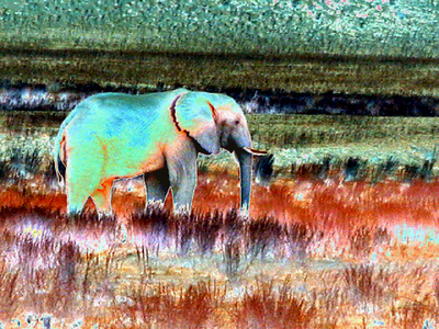 solarized-elephant 1 563