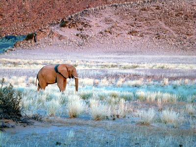 elephant-hoanib 1 559