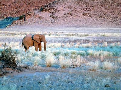 elephant 1 557