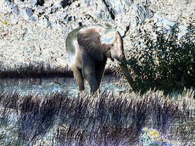 solarized-elephant 1 582