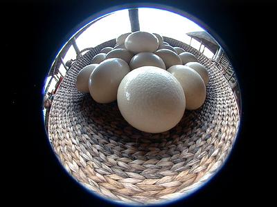 ostrich-eggs 1 618