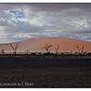 Desert Storm Brewing