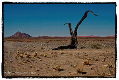 Dead Tree in the Desert