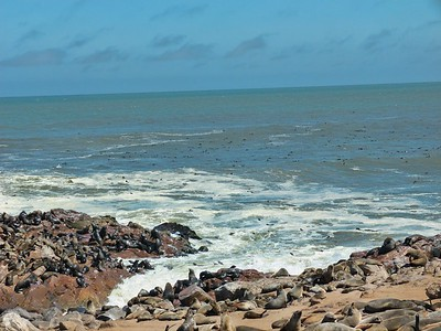 The beauty of the Atlantic Coast and some of the seal colony.