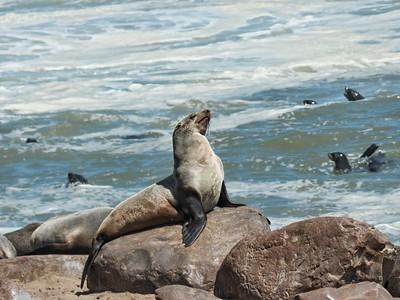 Seal attitude.