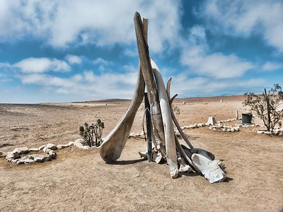 Whale bones at Cape Cross.