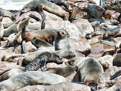 Part of the colony on the shore taking a nap.