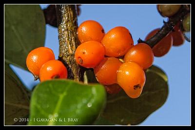 Swakopmund Berries