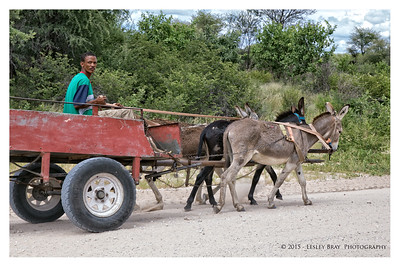 Man and Three Donkeys