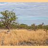 Tsumkwe Bush