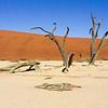 Deathvlei (Dead Vlei), Namib-Naukluft N.P.