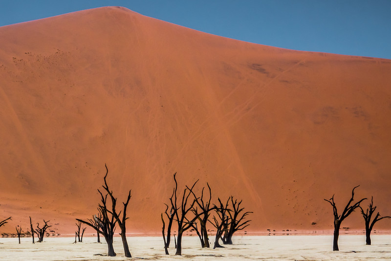 Deadvlei.  Namib-Naukluft National Park