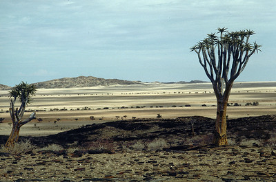 Namibia: sand, wildlife and stunning landscapes