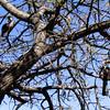 Southern Yellow-billed Hornbill (Tockus leucomelas), Etosha N.P.