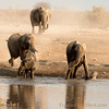 <strong><center><b> There is an expression of anticipation, joy and playfulness when a herd of Elephants are entering the water!