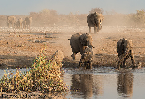 Water and elephants - It is an wonderful experience to watch the joy they express when reaching the waterhole for a bath!