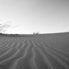 <em><b><center> Sandpattern, The NamibRand Nature Reserve