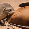 Namibie 2008 :  Swakopmund - Uis