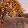 Namibie 2008 :  Hohenfell - Keetmanshoop