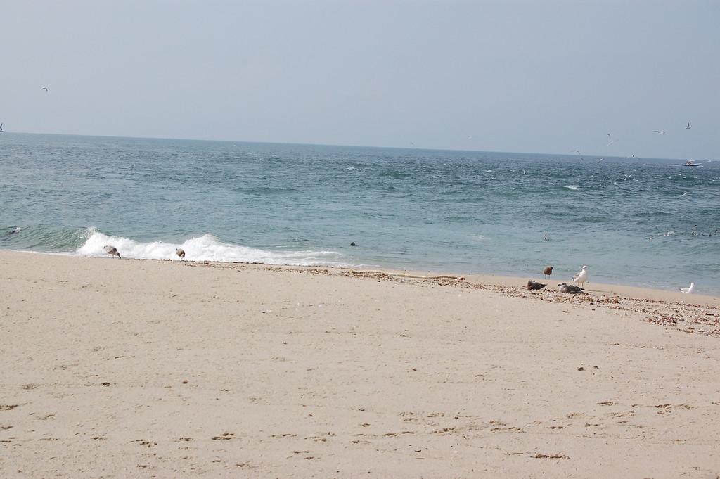 Little black spot in the water... a seal's head
