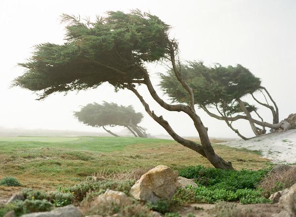 Napa, Carmel, Monterey