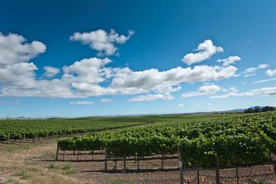 Acacia Winery, Carneros, Napa