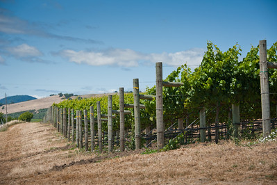 Shaffer Vineyard, Carneros