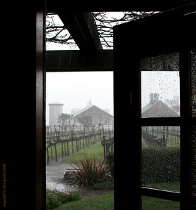 Rainy day in Napa Valley
