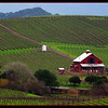 Napa Valley in late December
