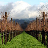 A vineyard's winter
