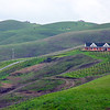 Napa hillside in the winter