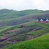 Napa hillside in the winter
