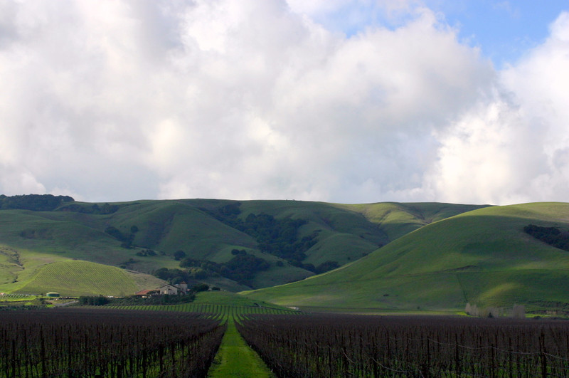 Big clouds over Carneros