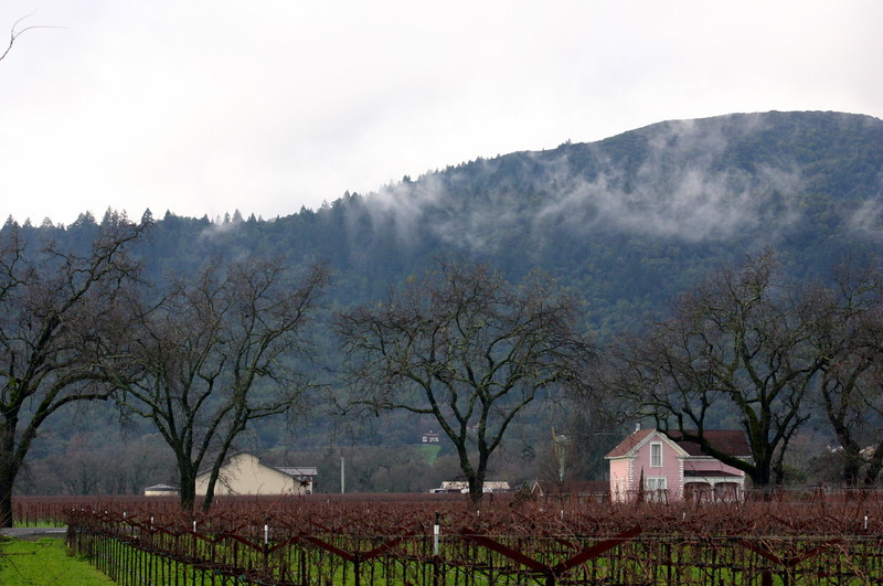 Five trees and a vinyard near the new year