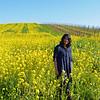 Vineyards and Mustard fields in Sonoma