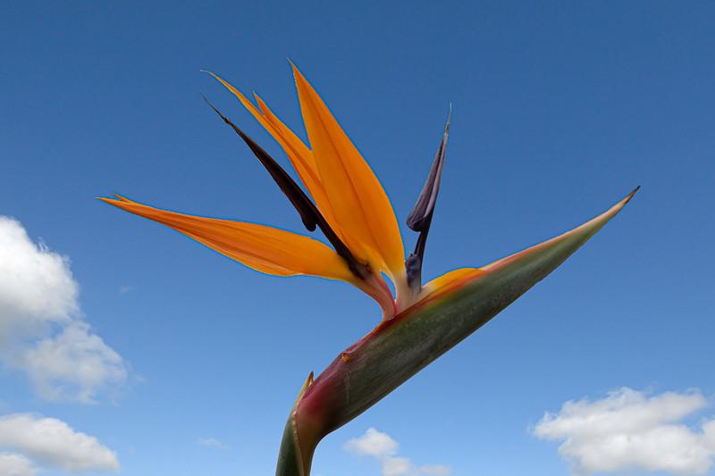 Flowers I saw around Naples Grande Beach Resort