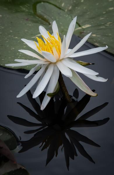 Location - Naples Botanical Garden