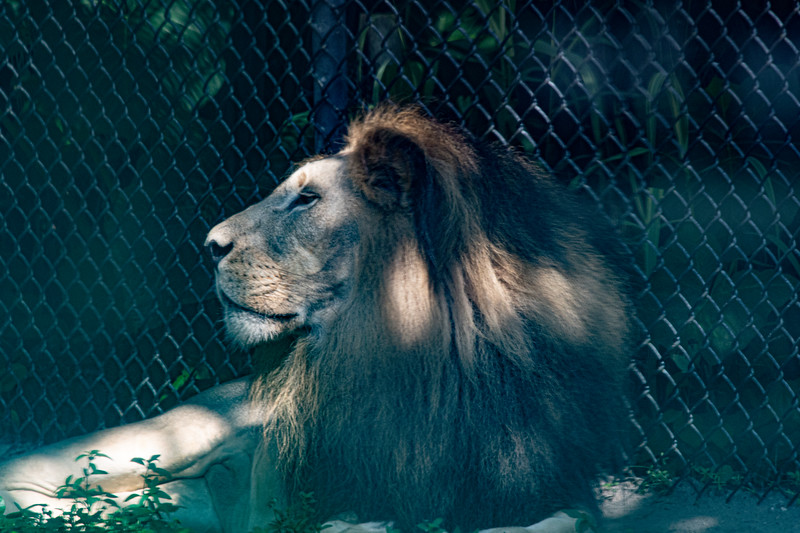 Location - Naples Zoo