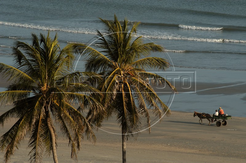 """Since roads are few and far between in Brazil's northeast, the best way to see the sun-soaked beaches of the region is by beach buggy. There are day trips out of the larger cities in the region, but one trip offered by tour operators, including """"Buggy e Cia"""" ( <a href=""""http://www.buggyecia.com.br"""">http://www.buggyecia.com.br</a>) is an adventure of a lifetime: Natal to Fortaleza. Separated by nearly 600 km (360 miles) and 5 days, the route passes some of the most breath-taking scenery in Brazil. Massive sand dunes, quaint villages, fresh water oasis and fresh seafood are all part of the journey.(Australfoto/Douglas Engle)"""